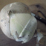 peeling jicama